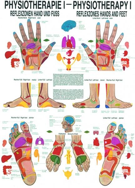 Anatomische Lehrtafel - Physiotherapie I, Reflexzonen Hand u. Fuß