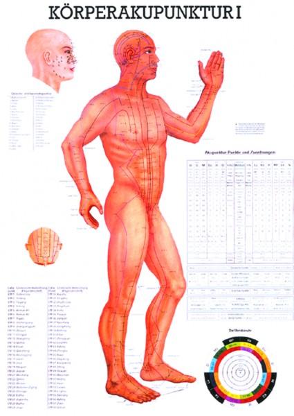 Anatomische Lehrtafel - Körperakupunktur I
