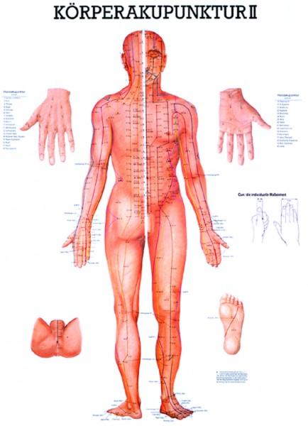 Anatomische Lehrtafel - Körperakupunktur II