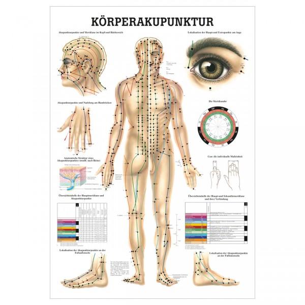 Anatomische Lehrtafel - Körperakupunktur